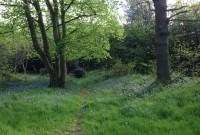 den_woods