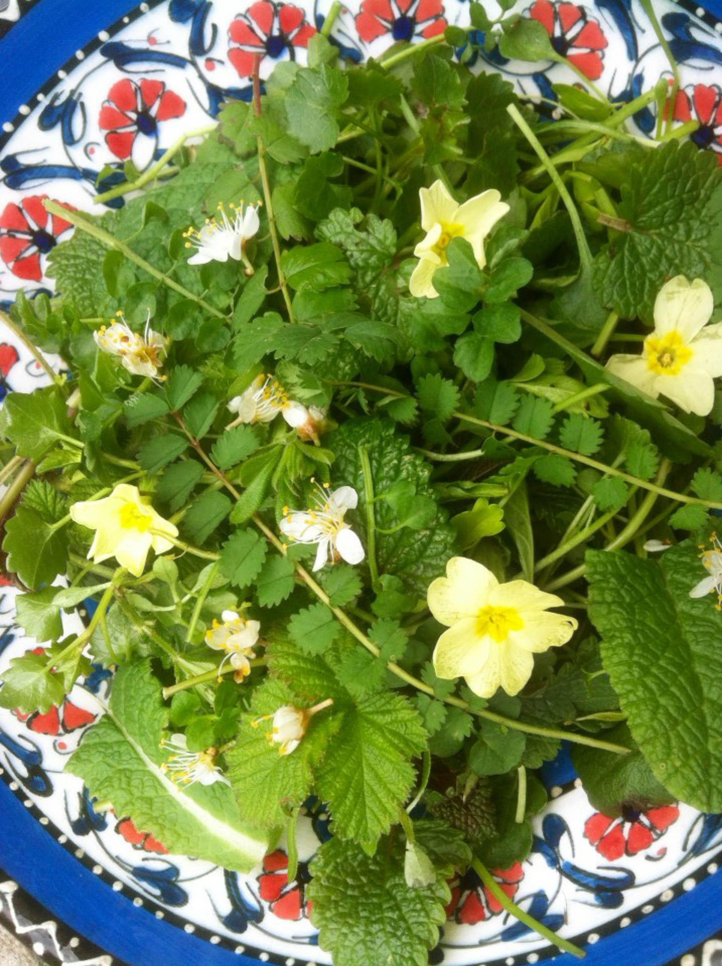 An introduction to foraging: a springtime foraging walk